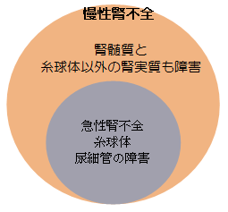 HP 慢性腎不全と急性腎不全.png