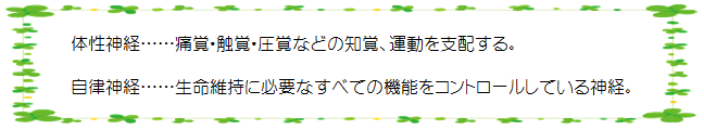 HP用 体性神経・自律神経.png
