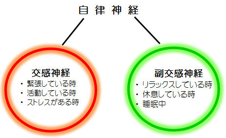 HP用 自律神経図.png